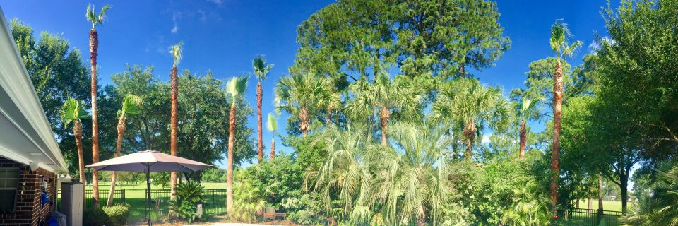 We have been providing arborists services since 2017